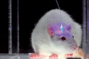 Нейробиологи научились дистанционно выключать боль