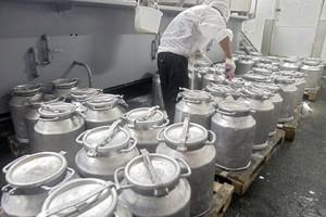 Молочники попросили отложить запрет на использование сырья от лейкозных коров