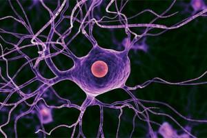 Специалисты обнаружили новый метод восстановления поврежденных нервных клеток