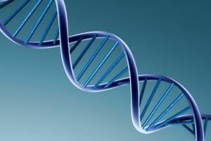 Мутантный ген может снизить риск развития сердечного приступа
