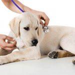 Сервис ветеринарной клиники «Био-Вет»: от прививки животным до полного лечения