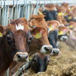 Белорусские молочники отвергли обвинения в низком качестве продукции