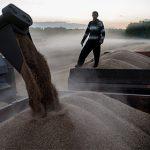 Россия отменила экспортную пошлину на пшеницу