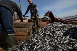 Россия получила право экспорта рыбной продукции в Иран