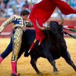 Испания: Каталония имеет право проводить корриду