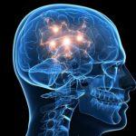 Медики рассказали, как в мозге человека создаются долгосрочные воспоминания