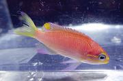 Новый вид рыб с Гавайев назвали в честь Барака Обамы