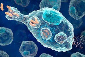 В мозге людей существуют иммунные клетки, которые лечат неврологические заболевания