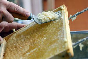 Роскачество выявило некачественный мед из четырех регионов