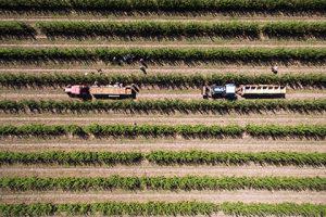 Путин пообещал сельскому хозяйству поддержку в 2017 году