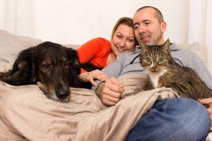 Эксперты рассказали о пяти животных, которые лечат людей