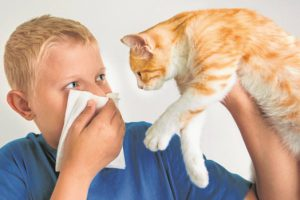 Основные проявления аллергии на кошек у детей