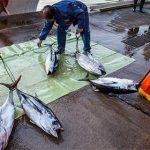 Япония задумала возобновить поставки в Россию рыбы из акватории возле Фукусимы