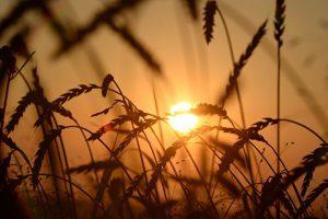 Иран рассматривает вопрос о снятии ограничений на импорт российской пшеницы