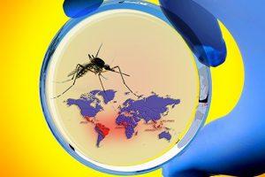 Вирус Зика вызывает пороки развития, проникая через плаценту