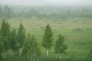 На границе России и Белорусии появится «Заповедное Поозерье»