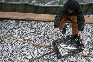 ФАС спросит с Росрыболовства за дорогие морепродукты