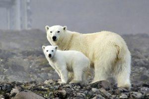 В «Зарядье» открывается мультимедийная выставка «Русская Арктика»