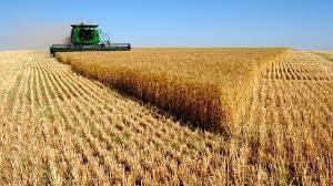 Возрождение российской пшеницы оттесняет США