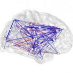 Составлена полная на сей день карта электрических связей мозга