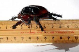 Тараканы живут на Земле более 200 млн лет
