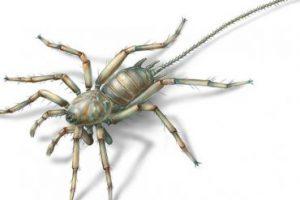 В мьянманском янтаре нашли древнего паука-химеру