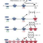 Учёные МГУ создали многофункциональные белково-полимерные плёнки