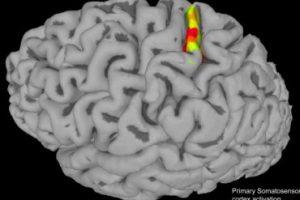 Парализованные пациенты смогут испытывать ощущения при движении