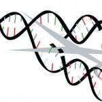 Биотехнологи объединились в новую ассоциацию