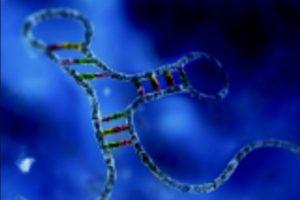 Учёные объяснили живучесть вирусов