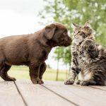 Что необходимо сделать перед тем, как завести собаку в качестве домашнего любимца?