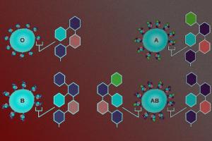 Модифицирующие группу крови ферменты нашлись в кишечнике