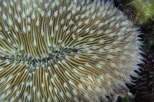 Кораллы за полвека приспособились к повышению температуры