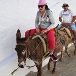 В Греции полным туристам запретили кататься на ослах