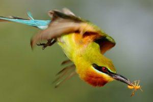 Взглянуть на мир глазами птиц: цвета, неизвестные человеку