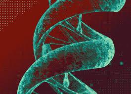 Создатели CRISPR призвали к глобальному мораторию на CRISPR-людей
