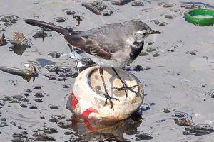 Хайнань откажется от производства и продажи одноразового пластика
