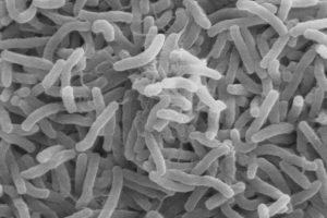 Старейший холерный вибрион оказался устойчив к пенициллину еще до открытия антибиотиков