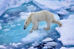 Ростуризму поручили подготовить программу развития круизного туризма в Арктике