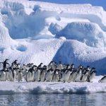 Популярность Антарктиды у туристов в 2020 году вырастет вдвое