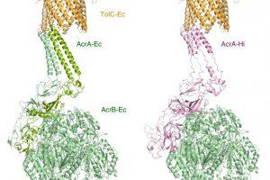 Истоки широкой лекарственной устойчивости нашли у несвязанных с человеком бактерий