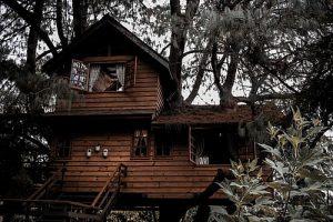 Строим дом на дереве