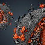 ВИЧ поймали на эволюции в сторону большей заразности