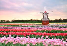 Почему страна тюльпанов, мельниц и сыра больше не Голландия?