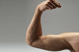 Мышцы помнят. Их память поможет восстановить физическую форму