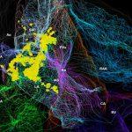 Ученые создали 3D-атлас внутрисердечной нервной системы крысы