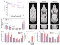 Российские исследователи сделали лечение рака наночастицами в разы эффективнее