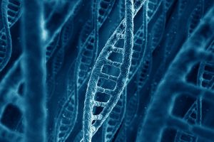 РНК определяет какие клетки получатся из стволовых