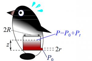 Физики рассчитали дальность метания фекалий пингвинами