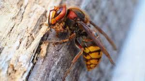 Усатые-полосатые: первая помощь при укусе пчелы или осы